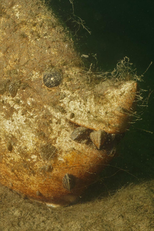 Allgemein Fischskulptur 1